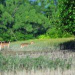 Attractions In Sundarbans