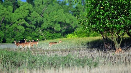 Attractions In Sundarbans